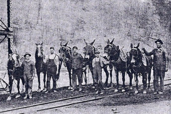 The old colliery mule team
