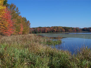 A beautiful shot of the Hemlock Lake Shoreline